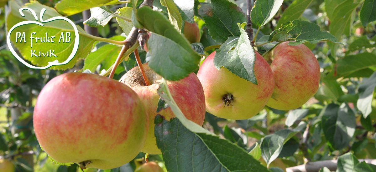 PA Frukt i Kivik